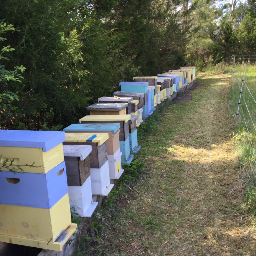 Nucs and Hives